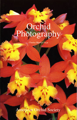 Picture of Orchid Photography