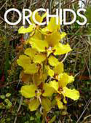 Picture of 2013/08 August ORCHIDS Magazine