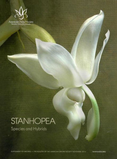 Picture of 2014/11 Stanhopea Species and Hybrids