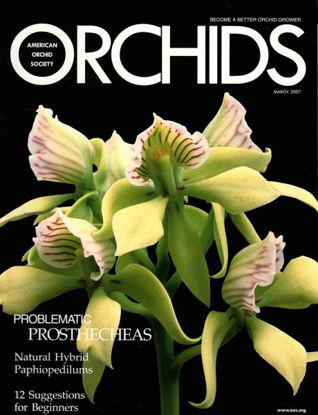 Picture of 2007/03 March ORCHIDS Magazine