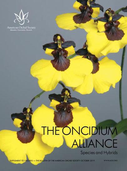 Picture of 2019/10 Oncidium Alliance Supplement