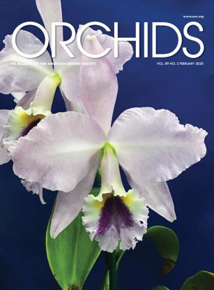 Picture of 2020/02 February ORCHIDS Magazine