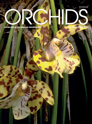 Picture of 2020/07 July ORCHIDS Magazine