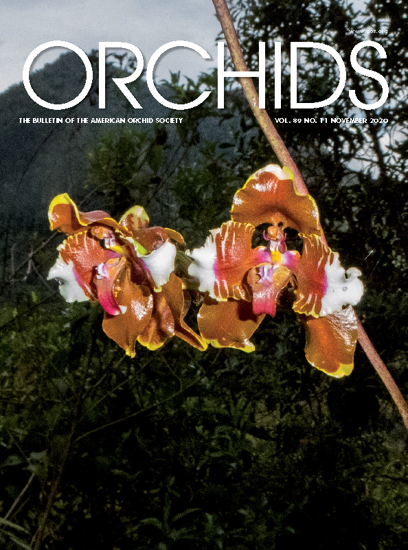 Picture of 2020/11 November ORCHIDS Magazine