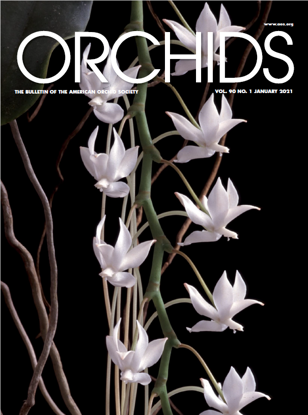 Picture of 2021/01 January ORCHIDS Magazine