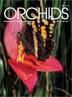 Picture of 2021/05 May ORCHIDS Magazine