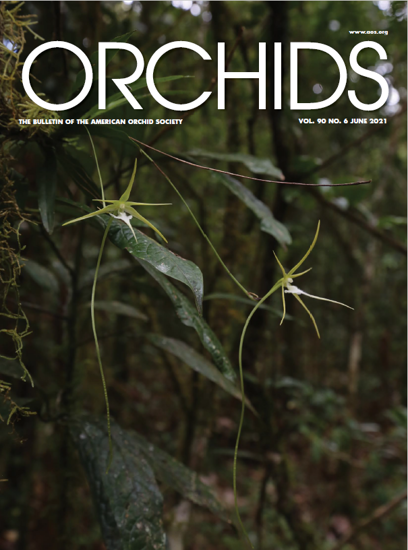 Picture of 2021/06 June ORCHIDS Magazine